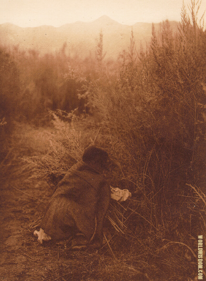 """Gathering arrow-brush"" - Pima, by Edward S. Curtis from The North American Indian Volume 2"