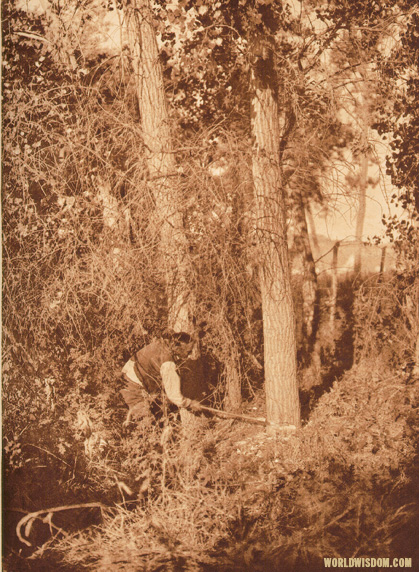 """Cutting the centre pole"" - Cheyenne, by Edward S. Curtis from The North American Indian Volume 6"
