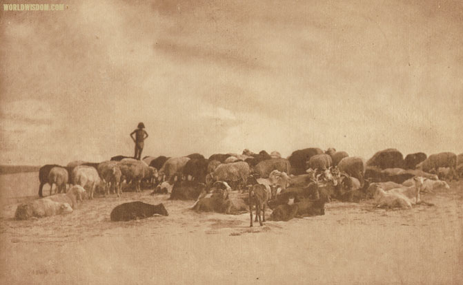 """A Hopi flock - Hopi"", by Edward S. Curtis from The North American Indian Volume 12"