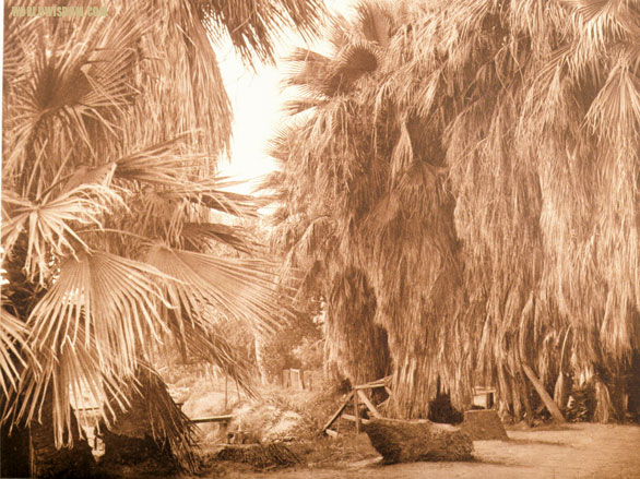 """Under the palms"" - Cahuilla, by Edward S. Curtis from The North American Indian Volume 15"