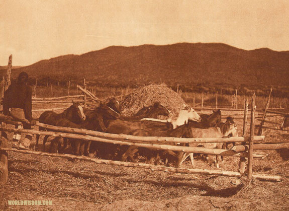 """Threshing wheat"" - Taos, by Edward S. Curtis from The North American Indian Volume 16"