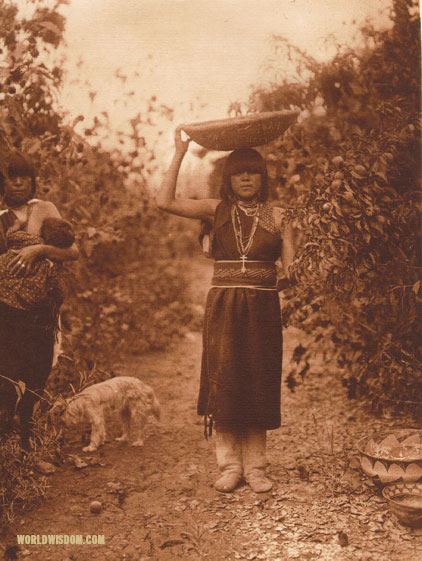 """Peach harvest - San Ildefonso"", by Edward S. Curtis from The North American Indian Volume 17"
