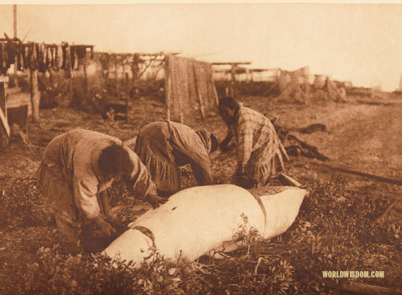 """Cutting up a beluga"" - Kotzebue, by Edward S. Curtis from The North American Indian Volume 20"