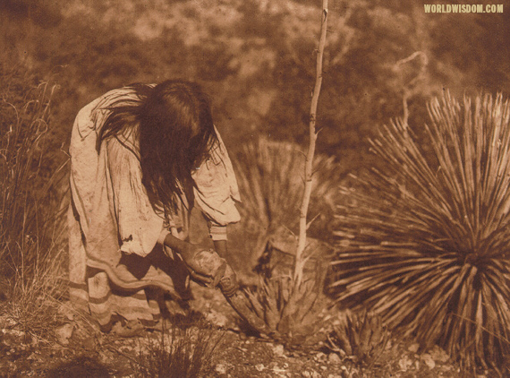 """Cutting mescal"" - Apache, by Edward S. Curtis from by The North American Indian Volume 1"